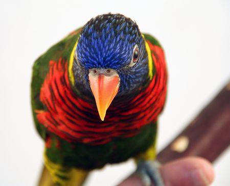 colorful bird 3 Imagens