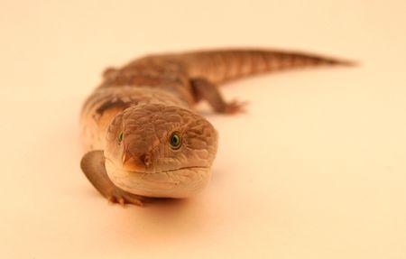reptile 1 photo