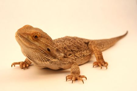 reptile 2 Stock Photo
