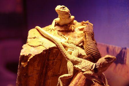 reptiles 3 Stock Photo - 312383