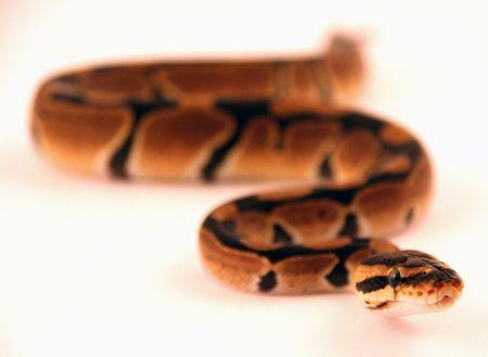 sneaking snake 1 photo