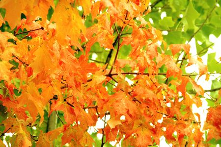 autumn fall leafs