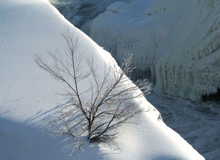 snow scene with tree photo