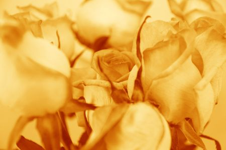 closeup of flowers in sepia photo