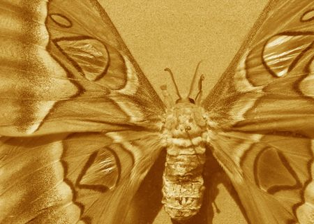 illustration of pretty monarch butterfly in sepia