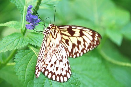 pretty monarch butterfly on flower