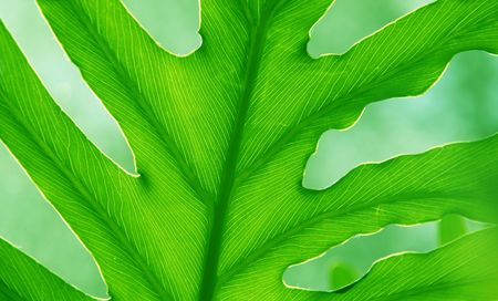 grean leaf with detailed natural creation in the close up of foliage in the sun light Zdjęcie Seryjne