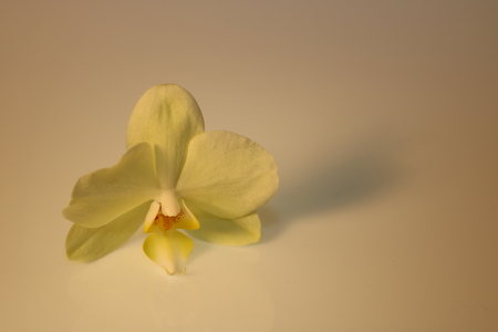 orchid blossom isolated on white background Stock Photo