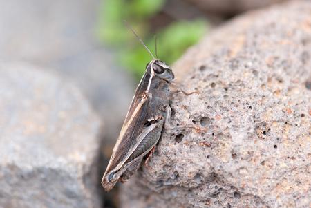 grasshopper: Grasshopper