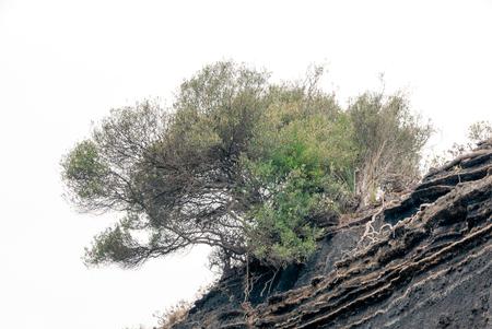 Tree in the precipice Stok Fotoğraf
