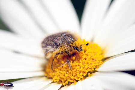 weevil: Weevil