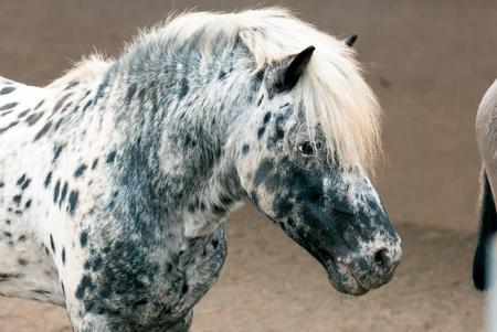 pony: Pony Stock Photo