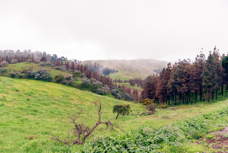 grand canary: Landscape of the Pinos of Gáldar (Grand Canary) Stock Photo