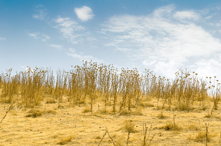 A shota of a withered plants field Stock Photo