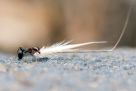 sprig: A macro shot of an ant carrying a sprig