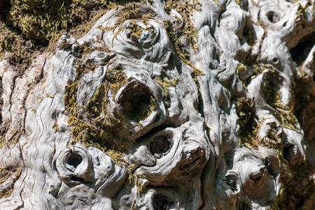 mistery: A macro shot ot the texture og a big trunk