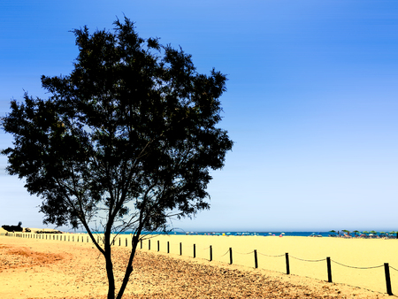 acido: Un colores ácidos composición de un árbol en una playa