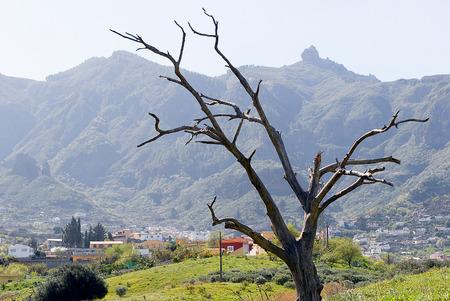 grand canary: A shot of Tenteniguada village, in Grand Canary island
