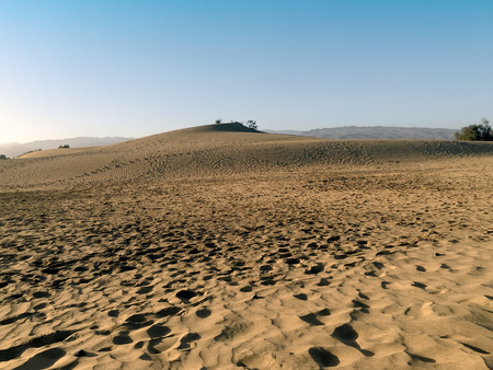 grand canary: A shot of a tarajal bush-tree in the nature reserve Dunes of Maspalomas (Grand Canary island)