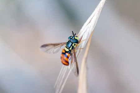 A macro shot of a hoverfly on a branch
