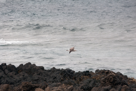 A shot of a seagull flying over the sea Foto de archivo