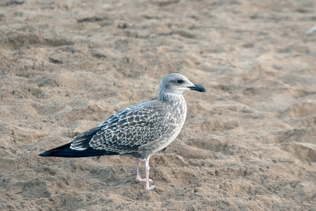 A shot of a watchful seagull on the sand of a beach