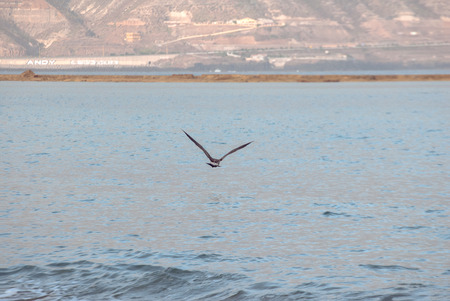 A shot of a seagull flying over the sea in the shore of a beach Foto de archivo