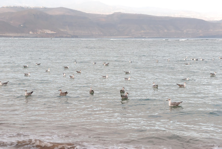 A shot of a flock of seagulls swimming in the sea