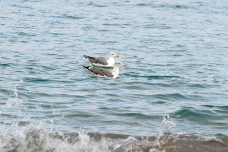 A shot of seagulls swimming in the sea