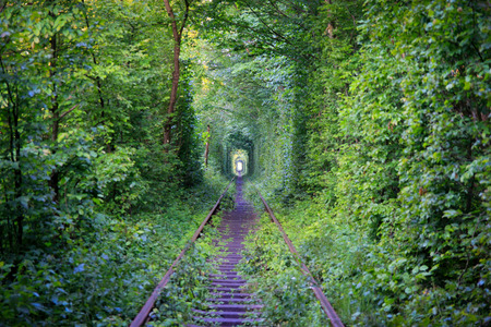 Green train tunnel in the forest created by thickets of shrubs and trees.