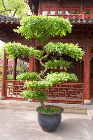 Pot-tree and pavilion in the Yu Yuan (The Garden of Peace and Comfort), Shanghai, China photo