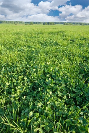 Spring clover field Stock Photo - 4555410
