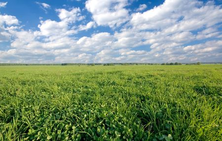 Green clover field and cloudy sky Stock Photo - 4721519