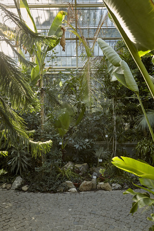 botanic garden indoors, in green house. tropic vegetation, various plants. Belgrade Serbia.