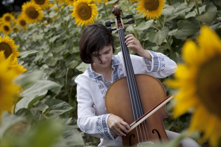 Cello Concert in Sunflowers photo