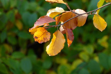 autumn leafs: Colorfult autumn leafs Stock Photo