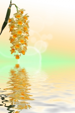 Orchids grape over water reflection photo
