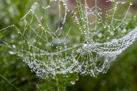Hung heavy load ... large spider web with morning dew photo