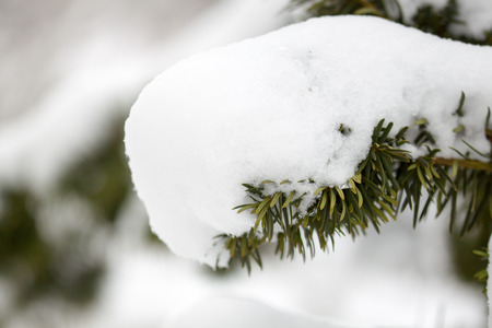 grandfather frost: Grandfather Frost - snowy branch in winter sentiment Stock Photo
