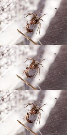catchy: Demonstration of the depth of field - fighting a running spider with a catchy tune