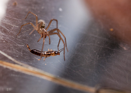 catchy: Fighting a running spider with a catchy tune