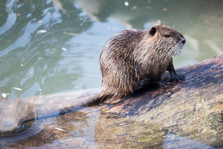 A nutria for skin care Stock Photo