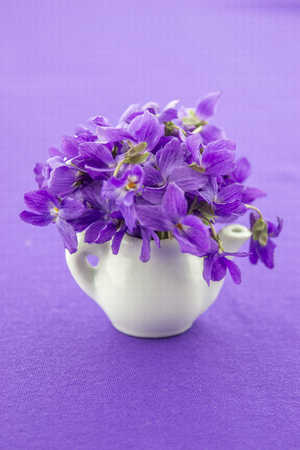 violets: Wild violets on my table Stock Photo