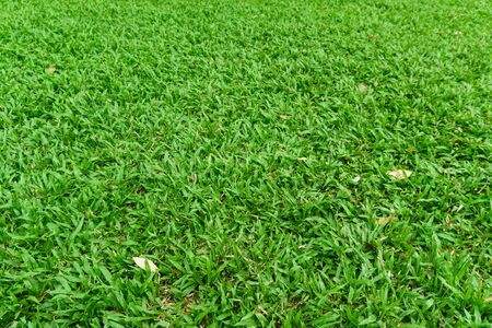 top view green grass wallpaper Stockfoto