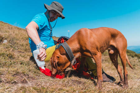 Young man giving water to his hungarian vizsla dog during rest while hiking