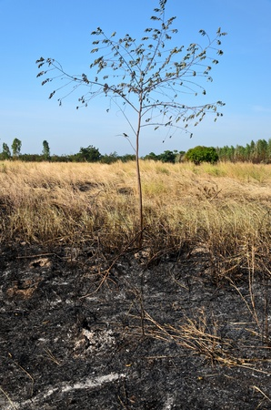 Grass after burning Stock Photo