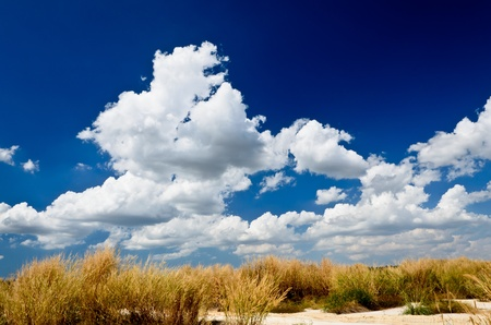 Beautiful blue sky with flower grass
