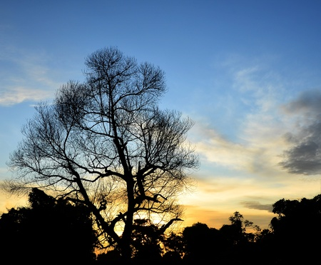 silhouette tree at sunset Stock Photo - 12390726