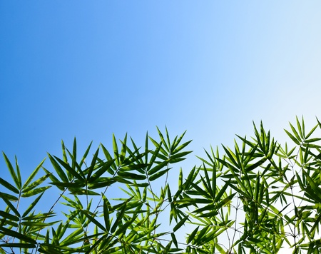 Bamboo leaves and sky