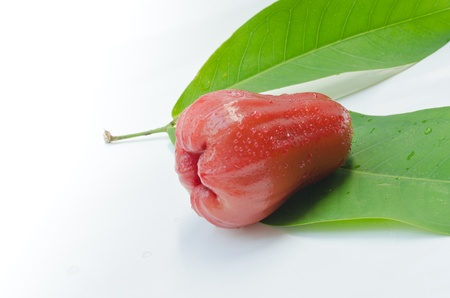 A rose apple on white background Stock Photo